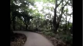 六甲山散歩 保久良山~岡本八幡神社