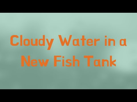 Cloudy Water In A New Fish Tank