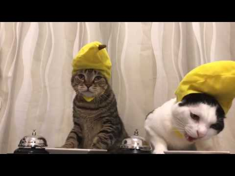 Cat With Hats Ringing Bell For Treats