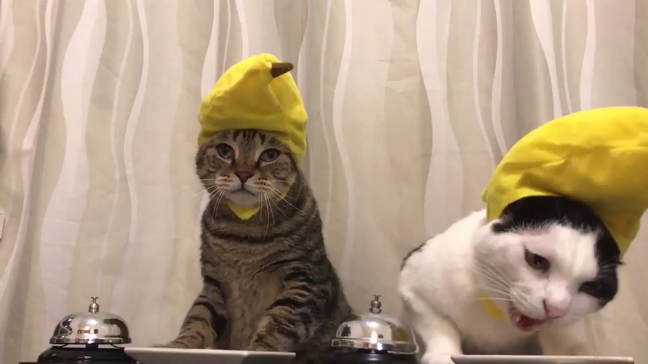 Cats In Banana Hats Ring Bells Youtube