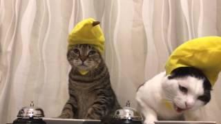 Cats in banana hats ring bells
