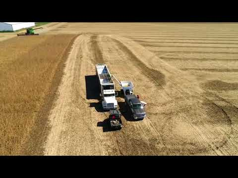 Harvesting the Non GMO bean Plot, Hartman Farms