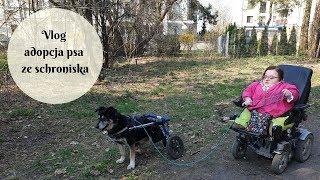 Vlog - adopcja psa ze schroniska