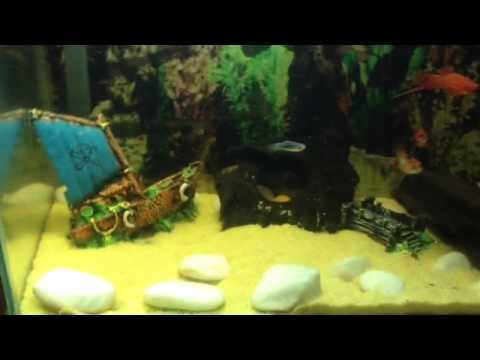 Criação De Peixes Do Meu Primo