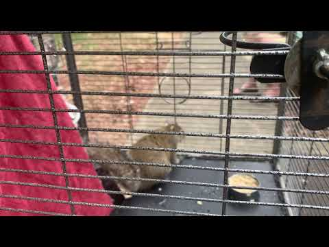 Steve Powers - Alabama man kept a caged squirrel and fed it meth to keep it aggressive