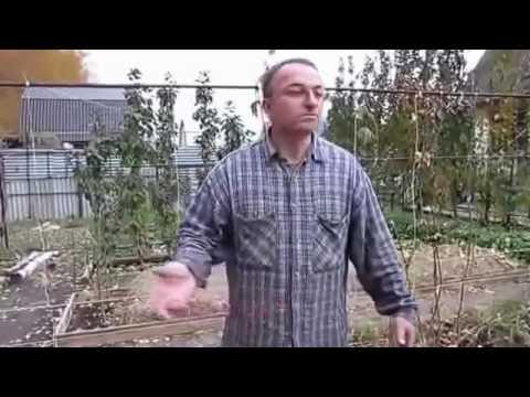 Полив мульчи после укладки в делянку в саду и огороде. Сергей Дьяков.mp4