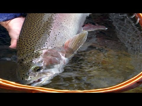 The Columbia River *Trailer* - Catch Magazine by Todd Moen