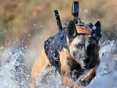 SEALS K-9  THE ONE