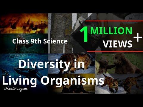 Diversity in Living Organisms : CBSE Class 9 IX Science