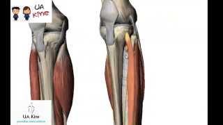 Inferior pierna como mi la parte se de llama