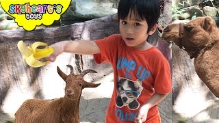 Toddler feeding animals in the zoo - Jungle Safari Kids and Forest Goats, Camel, Donkey, Monkey