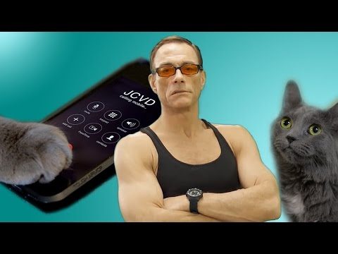 Be Nice To Your Cat Or Else Jean-Claude Van Damme Will...