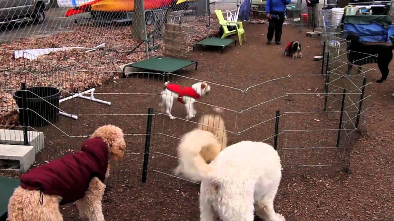 Dog Day Care Sacramento