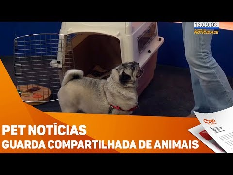 Pet Notícias: Guarda compartilhada de animais - TV SOROCABA/SBT