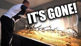 ripping-apart-the-375-gallon-aquarium