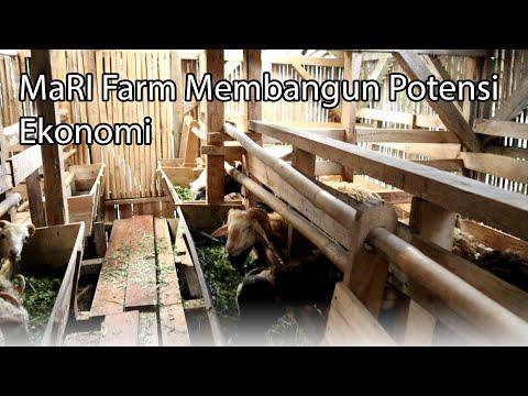 MaRI Farm Menyelaraskan
