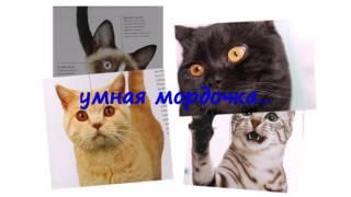 "Дэвид Элдертон ""Все породы кошек"". Буктрейлер"