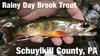 WB - Rainy Day Brook Trout, Schuylkill County, PA - September '18