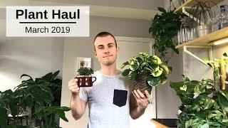 Houseplant Haul | March 2019
