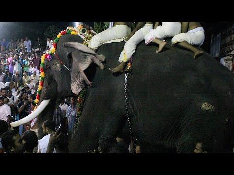 Thrikkadavoor Sivaraju 2017 at Peruvanam Pooram