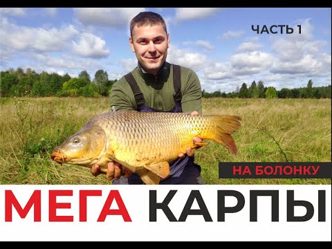 МЕГАКАРПЫ НА БОЛОНКУ! Удочка в дугу, фрикцион визжит! Огромные дикие рыбы! Часть 1