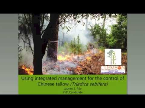 SFE Webinar: Integrated Management for the Control of Chinese Tallow