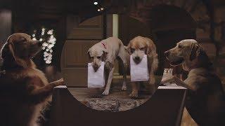 Funny Commercial Dog Doggie Bag Subaru
