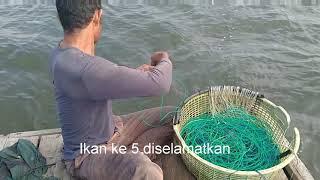 Edisi special Merawai ikan Malung dilaut Dumai