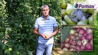 Strategia ochrony przedzbiorczej jabłoni i grusz