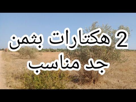 2 Hectares Terrains agricoles Meknès |  فرصة للإستثمار بالمجال #الفلاحي