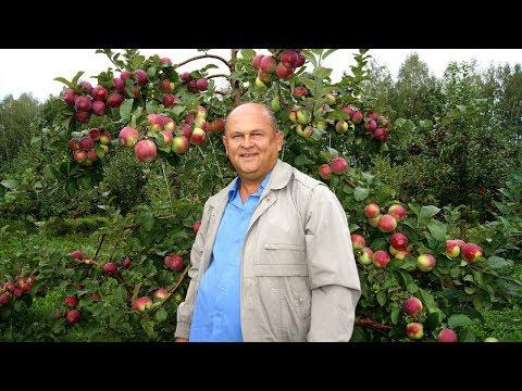Ученый из Мичуринска создал образцовое плодово-ягодное предприятие