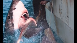 47 Meters Down: The Next Chapter (2018) Official Teaser