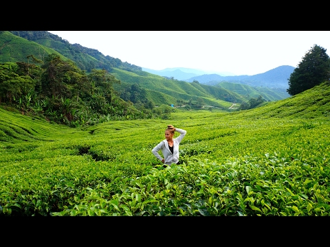 Tea Plantations YOU NEVER SEEN Before in Cameron Highlands [ Malaysia 2017 ]