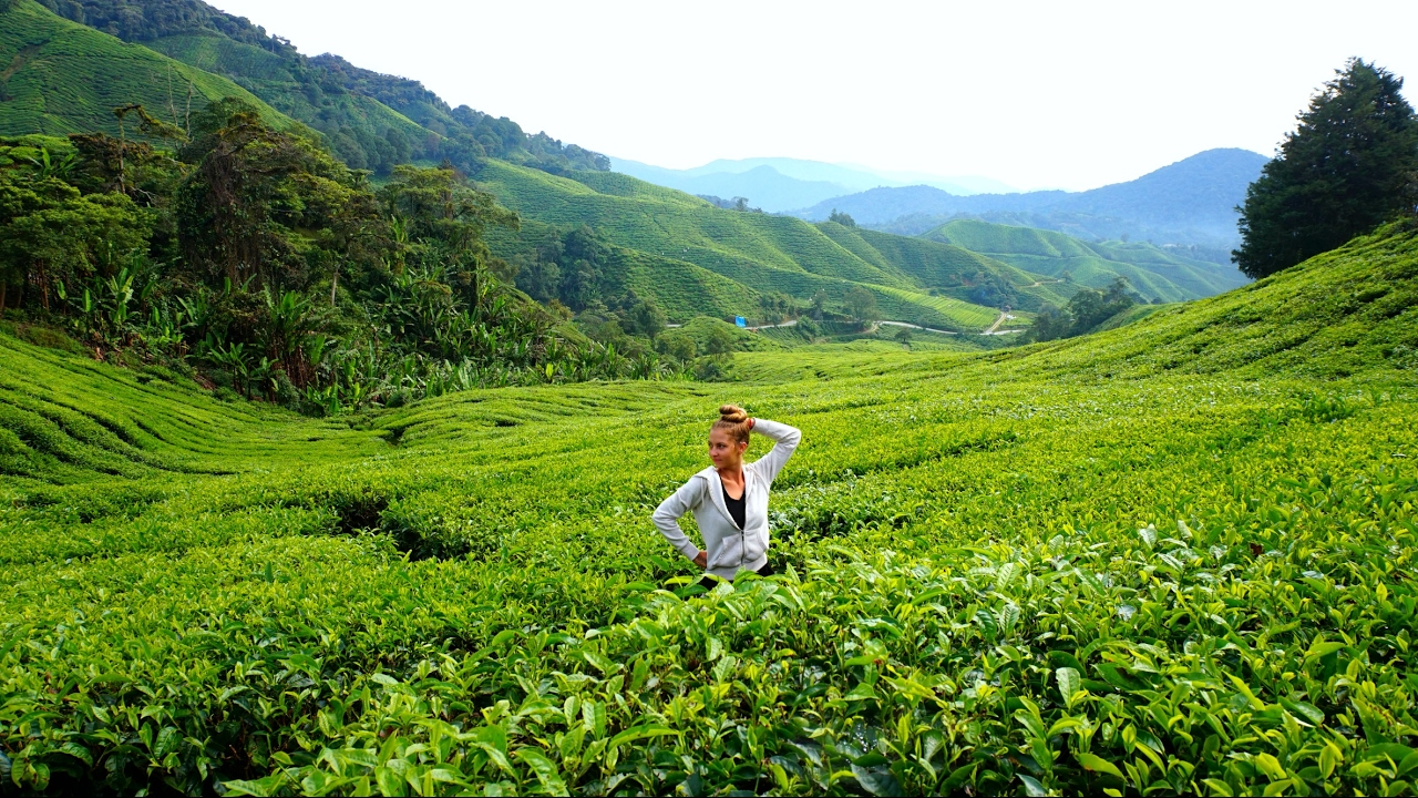 Tea Plantations YOU NEVER SEEN Before in Cameron Highlands ...