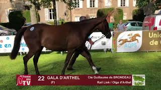 Sprinter Sacré Show 2018 : Lot 22 - GALA D'ARTHEL