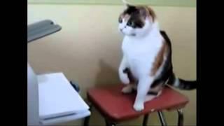 Funny Crazy Cats Gatos Doidos