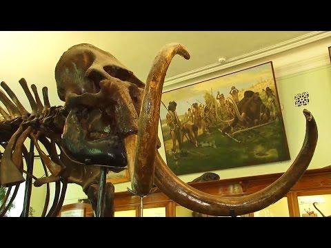 Экскурсии. ТГУ для всех. Палеонтологический музей ТГУ. Скелеты древних животных