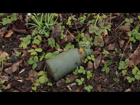 Degradability test of our Green Fiber Bottle in nature