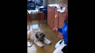 Bowie Is Ashamed: Dog Trainer Teaches Lesson