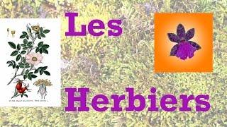 Les herbiers : récolte d\'échantillons, réalisation et mise en page
