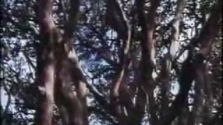 Ariel Ramirez y Jaime Torres-Nacimiento del charango.wmv