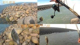 釣魚趣 盜餌高手一推 還好有驚喜沒白跑