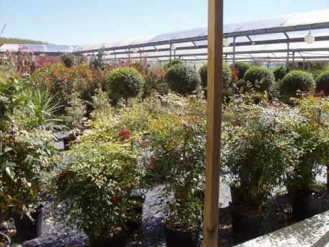 Un paseo por el c j viveros gimeno youtube - Garden center valladolid ...