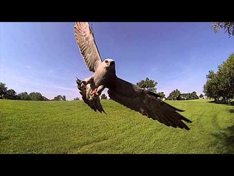 Kite Attack
