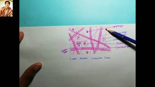 20 How to Draw Loose & Dense Regular Connective Tissue/Histology/1st year MBBS