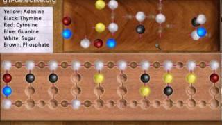 DNA Puzzle (WAC)