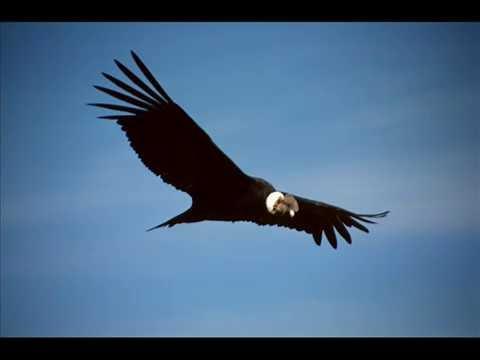 Inti Illimani - el condor pasa