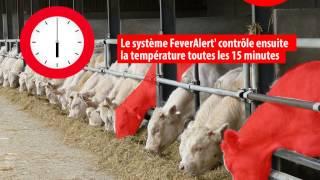 Expertis FeverAlert' , la boucle qui alerte en cas de fièvre des bovins