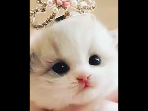 Kucing Tercomel Youtube