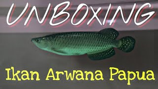 Rp 600.000 Unboxing Ikan Arwana Jardini atau Irian